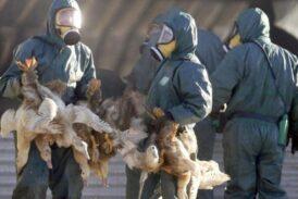 China reporta caso de gripe aviar H5N6 en hombre
