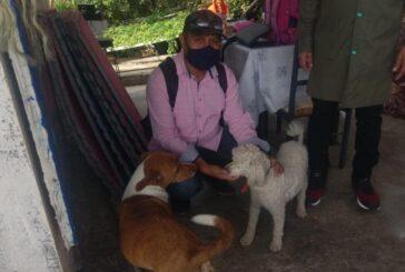 En lo que va de 2021, atiende Ayuntamiento de Oaxaca 182 denuncias por maltrato animal