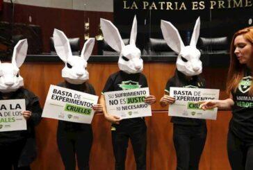 Senado aprobará ley que prohíbe pruebas en animales en la industria cosmética