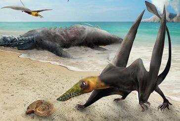 Científicos identifican en Chile un pterosaurio, o dragón volador prehistórico