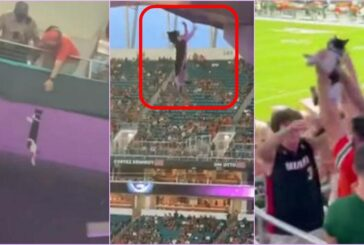 VIDEO: Aficionados salvan a gato que colgaba del nivel superior de un estadio